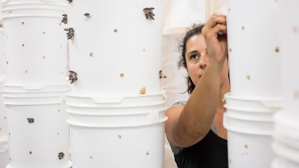 Dominique Lynch-Gauthier cueille des pleurotes dans une serre de Blanc de Gris.