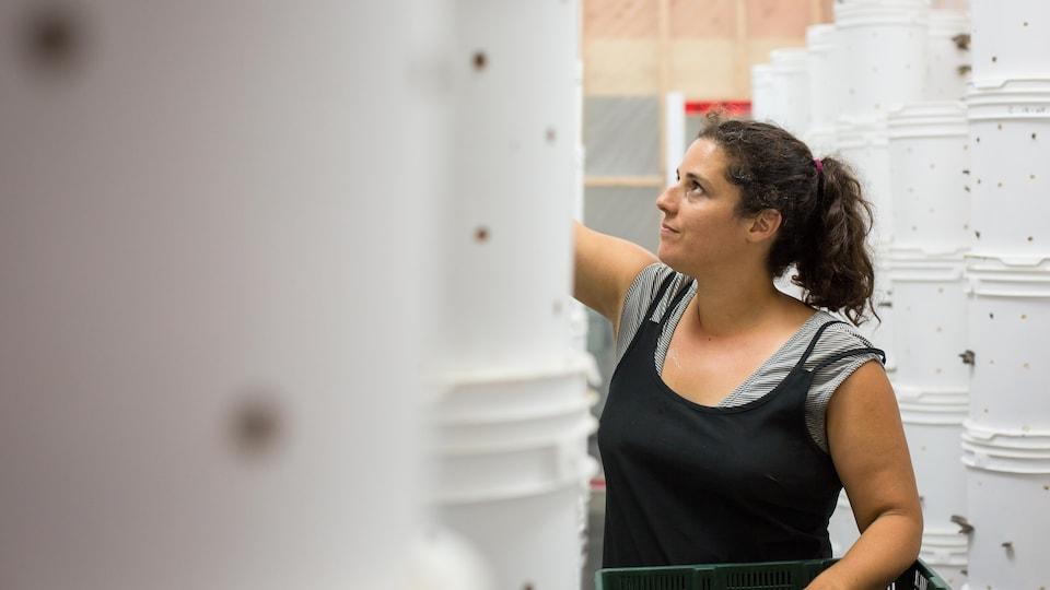 L'entrepreneure Dominique Lynch-Gauthier cueille des pleurotes dans l'une des serres de Blanc de Gris.