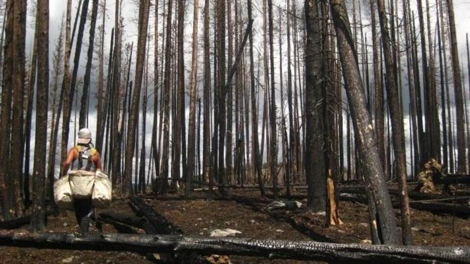 Un planteur d'arbres au milieu d'un boisé.