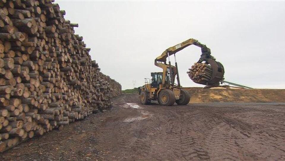 Un producteur de bois d'oeuvre canadien