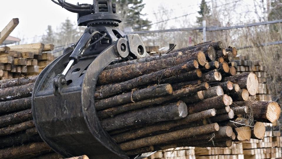 Billots dans une cours à bois