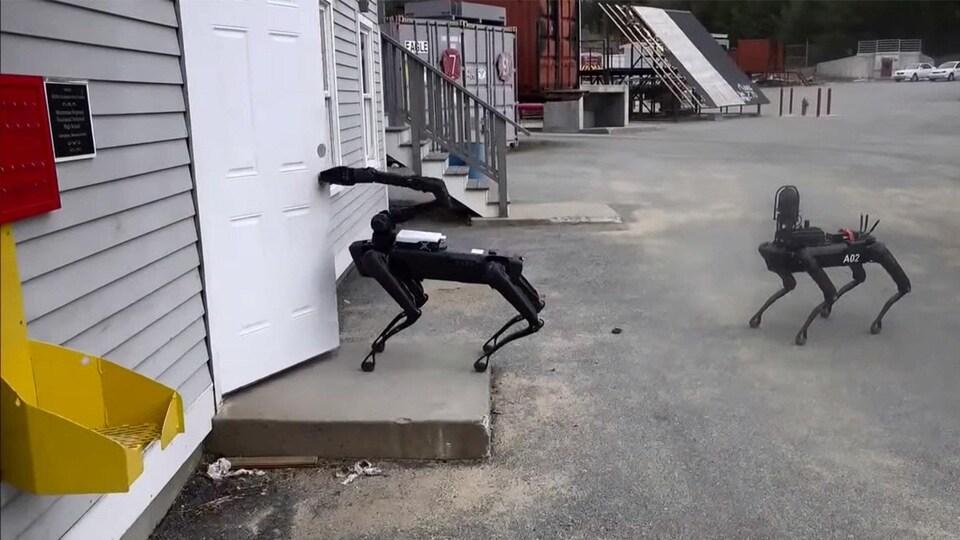 Un robot-chien de Boston Dynamics ouvre une porte tandis qu'un autre l'observe.