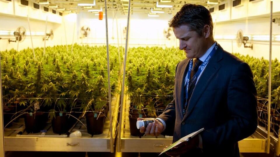 Brendan Kennedy devant des plants de cannabis.