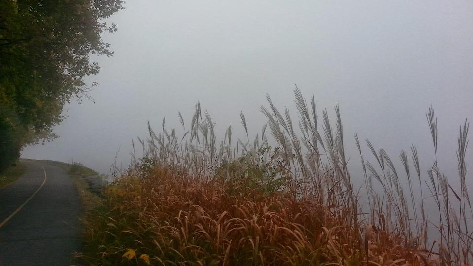 Une piste cyclable longe la rivière plongée dans le brouillard.