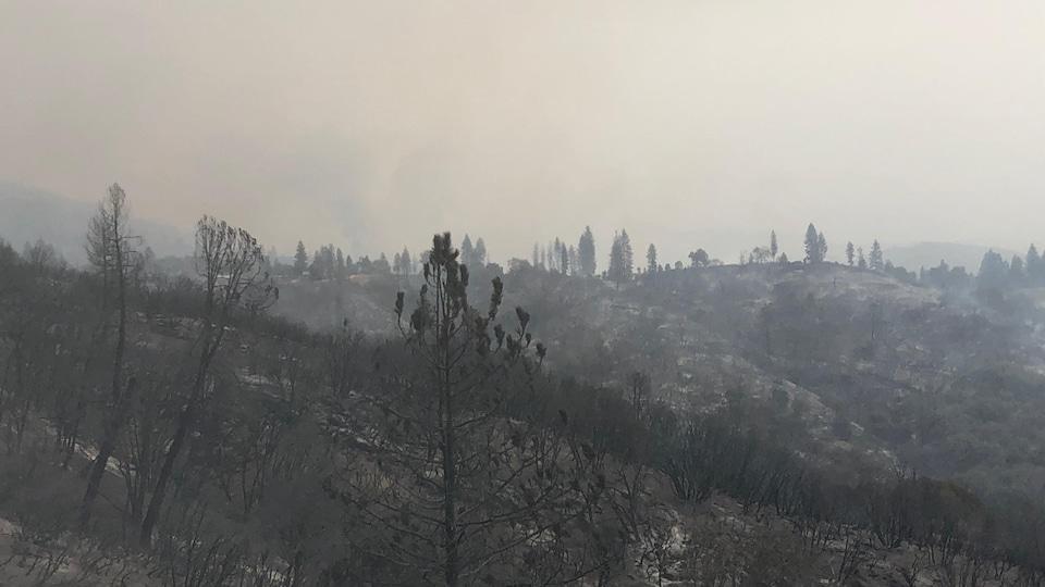 Des arbres et des collines avec, derrière, un brouillard de fumée.