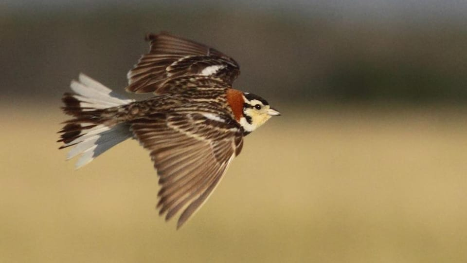 Un oiseau en vol.