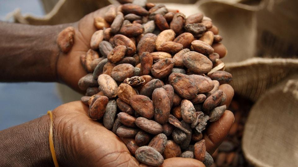 Des mains jointes tiennent du cacao.