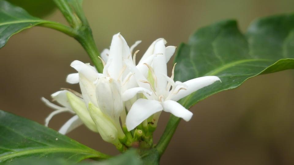 Une fleur blanche pousse dans un arbuste