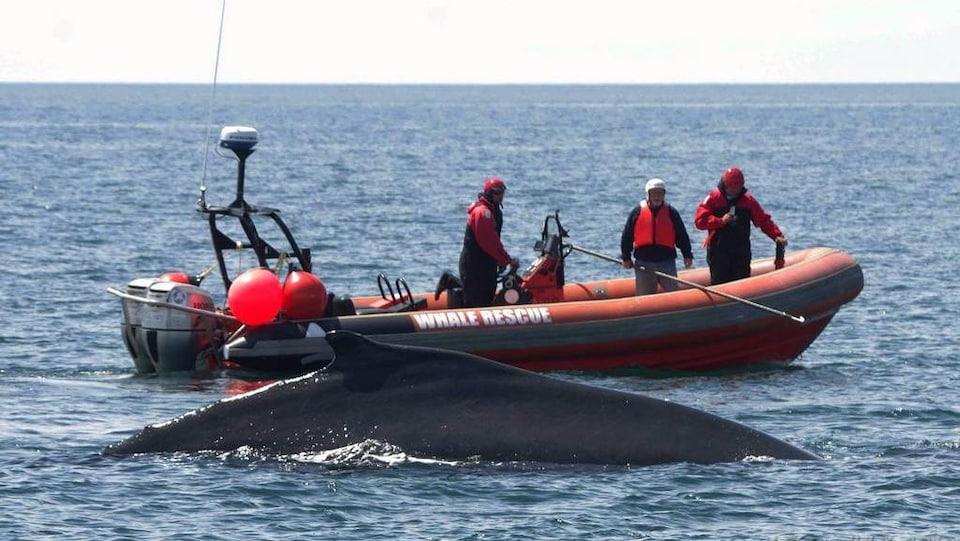 Trois hommes sur un canot pneumatique en mer à côté d'un gros mammifère marin