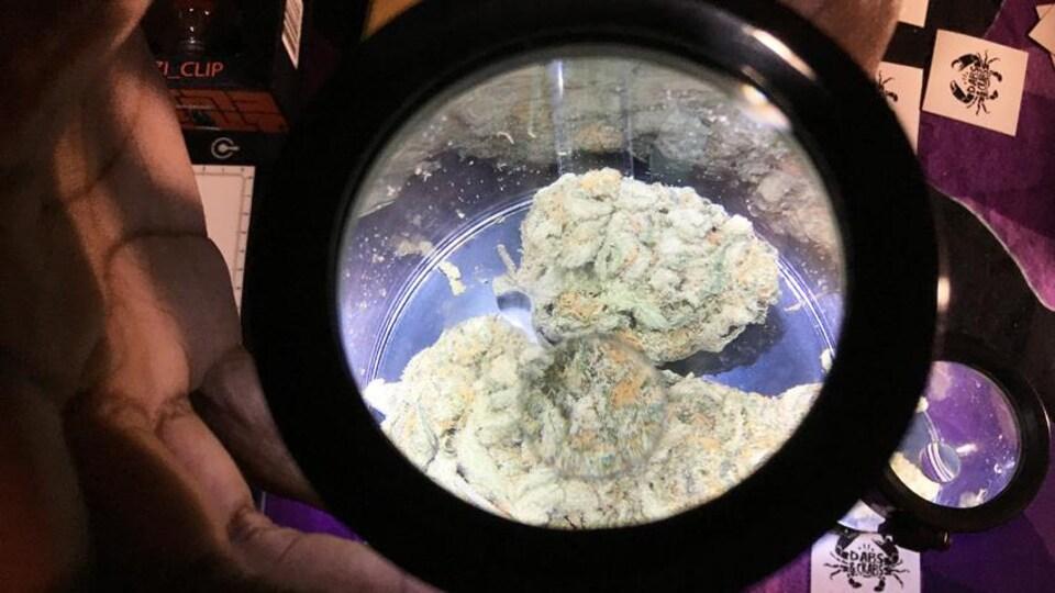Un vendeur du marché aux puces CannaMania présente un pot hermétique contenant un échantillon de marijuana.
