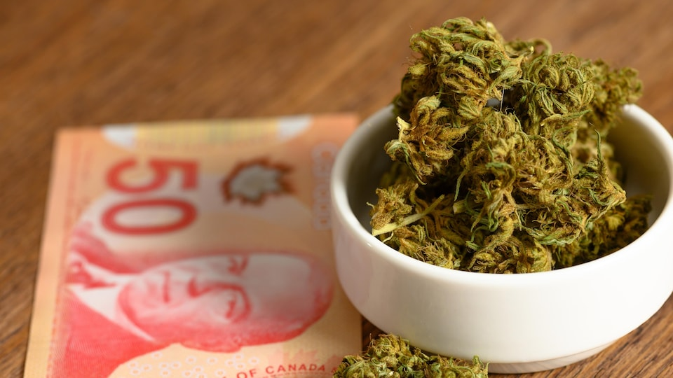 Du cannabis dans un petit bol près d'un billet de 50 dollars canadien.