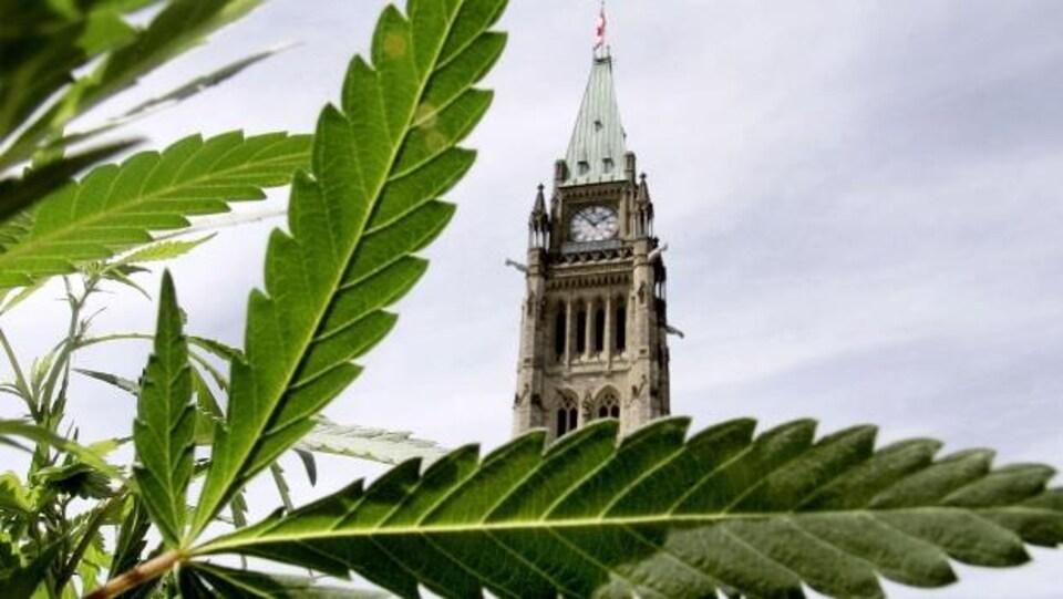 Quelles seront les mesures prises par le gouvernement fédéral pour encadrer la légalisation de la marijuana?