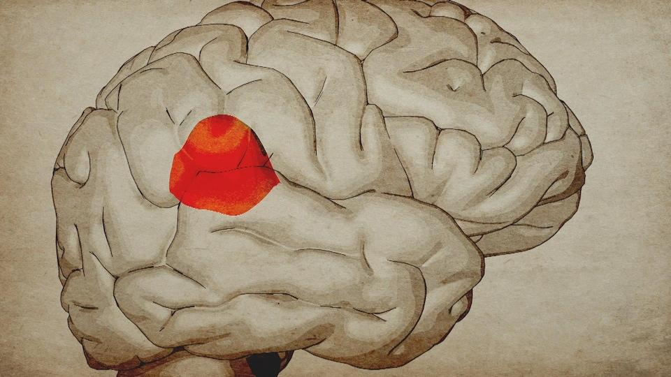 Infographie du carrefour temporo-pariétal du cerveau