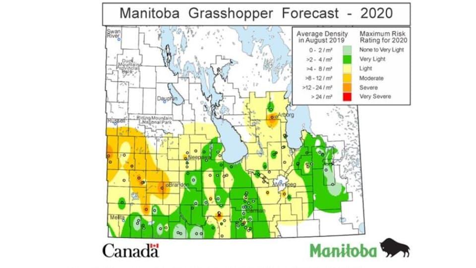 Une carte du sud du Manitoba avec de larges secteurs jaunes ou oranges, montrant le risque de présence de sauterelles.