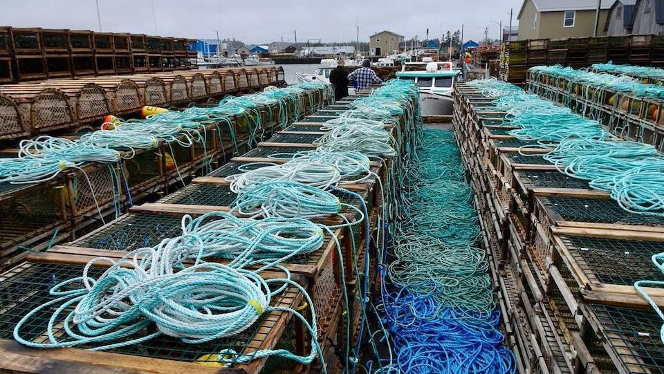 Dizaines de casiers à homards et de cordages sur un quai.