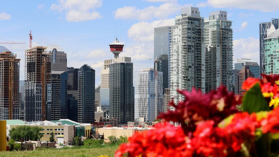 Des gratte-ciel et des fleurs au coeur de Calgary.