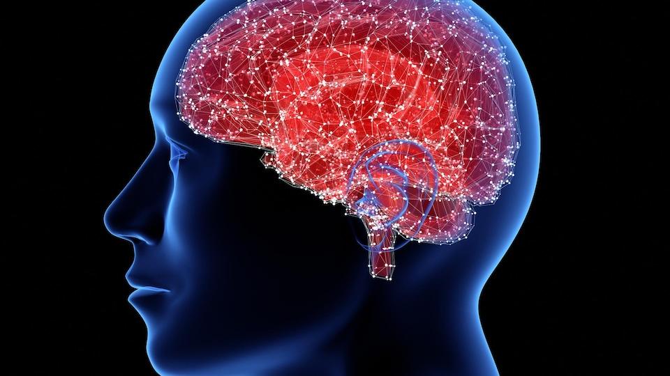 Représentation d'un cerveau.