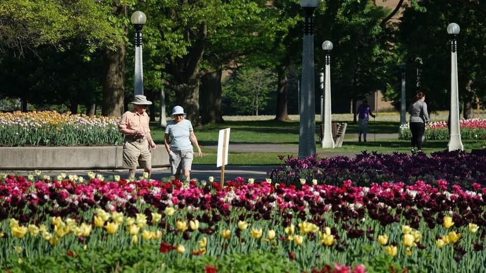 Deux personnes dans un parc d'Ottawa regardent des massifs de tulipes.