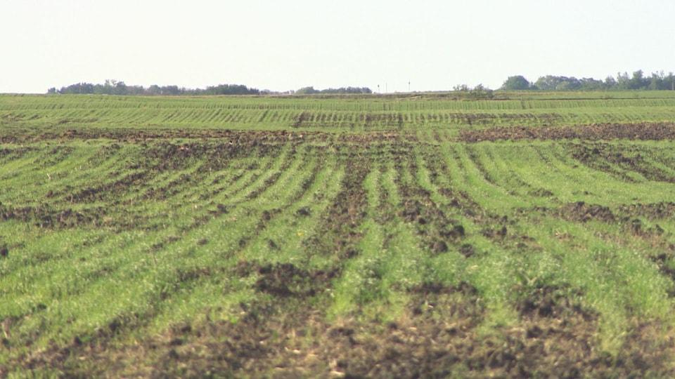 Un champ bio de la ferme Heide