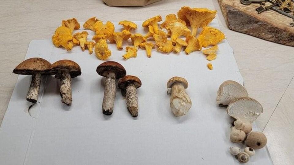 Des champignons.