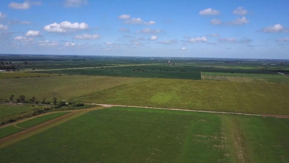 Vue aérienne de plusieurs champs verts sous un ciel bleu avec quelques nuages.