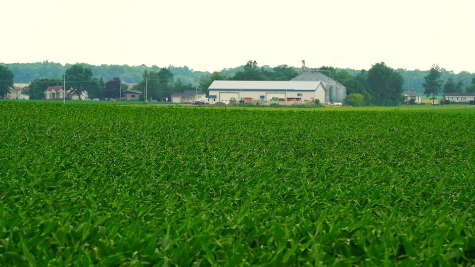 Il y a 30 000 fermes au Québec.