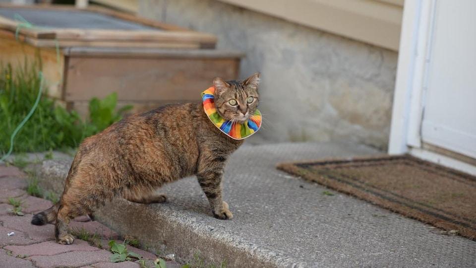 Un chat devant une porte, il porte au cou un large collier multicolore.