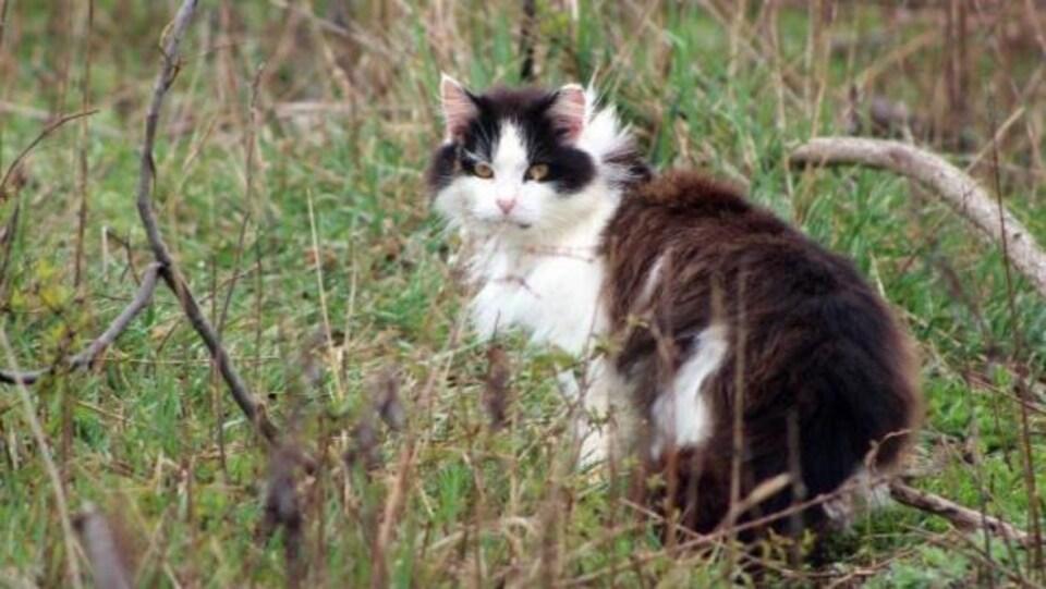 Un chat dans un champ d'herbe
