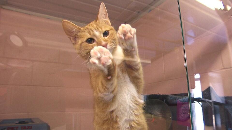Un chat dans une cage sur deux pattes, avec ses deux pattes avant qui reposent contre la vitre.
