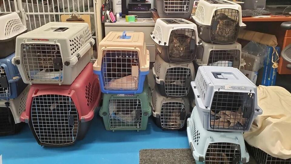 Plusieurs chats dans des cages.