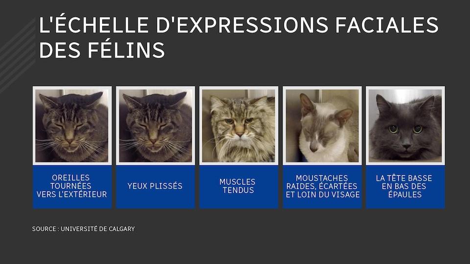 Une image avec des visages de chats.