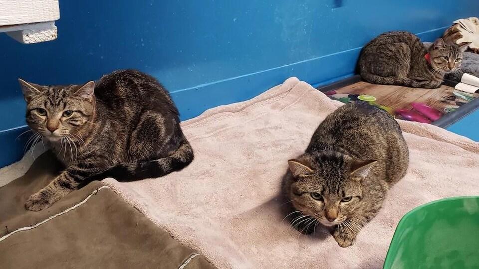 Des chats couchés sur une couverture.