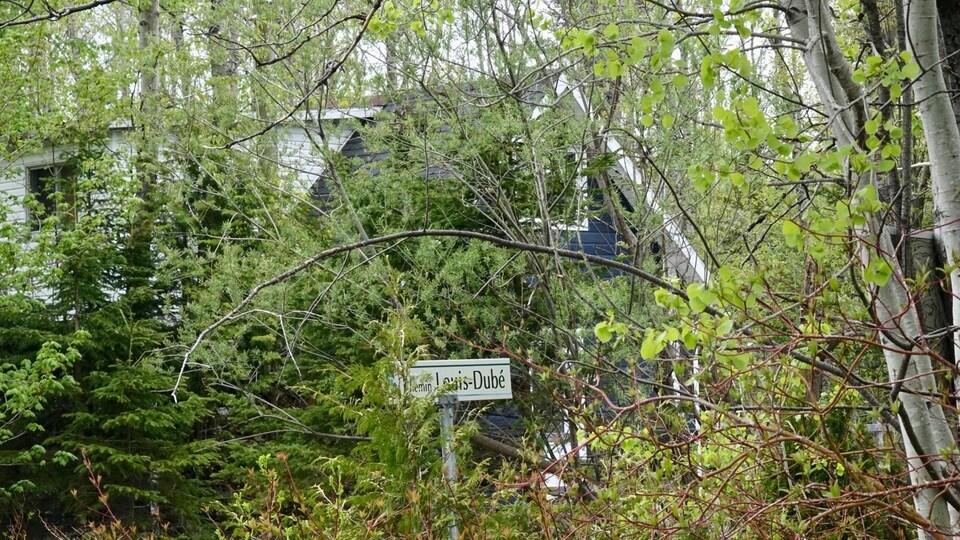 Les maisons du secteur sont situées dans le boisé près de la rivière
