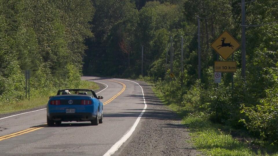 Route et pancarte annonçant la présence de cervidés.