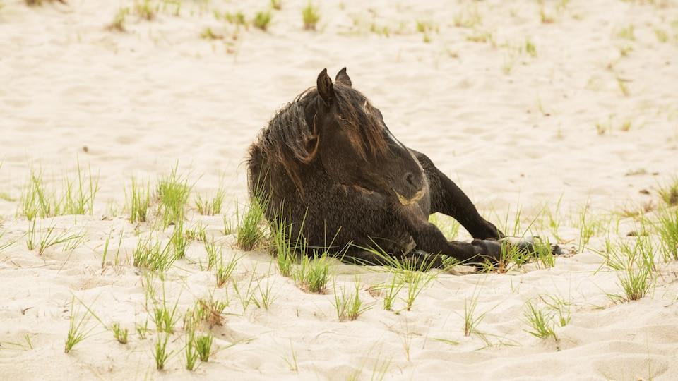 Un cheval sauvage étendu dans le sable.