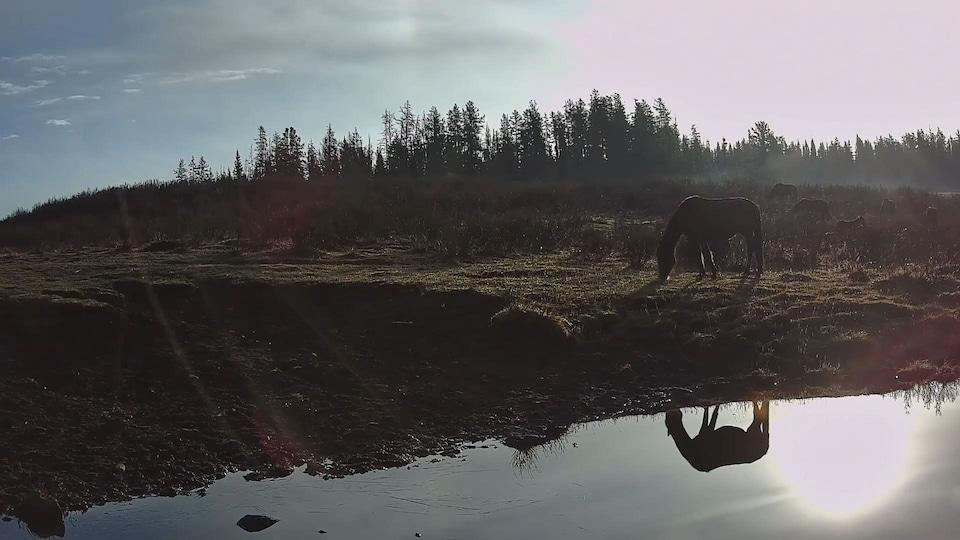 Un cheval broute de l'herbe à la brunante devant un plan d'eau qui reflète son image.