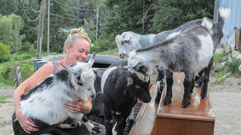 Shanda Hill et les quatre chèvres sur un piano.