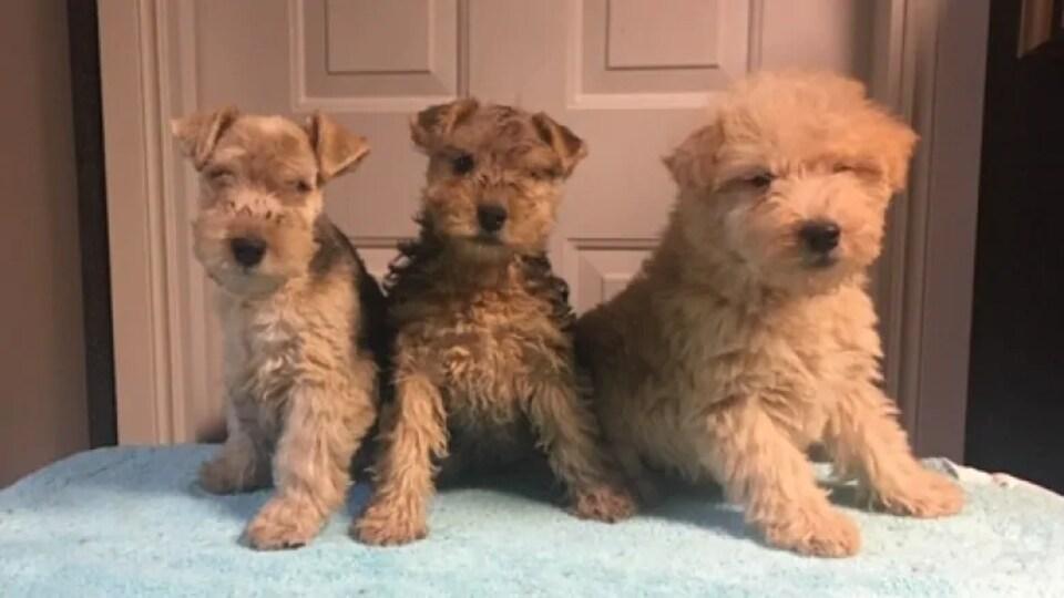 Trois petits chiens devant une porte