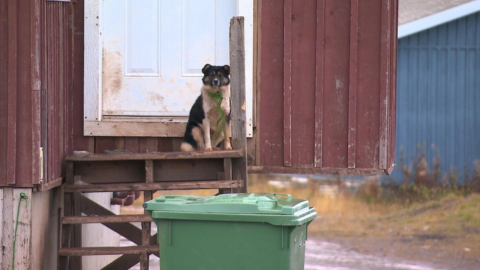 Un chien sur un perron regarde la lentille