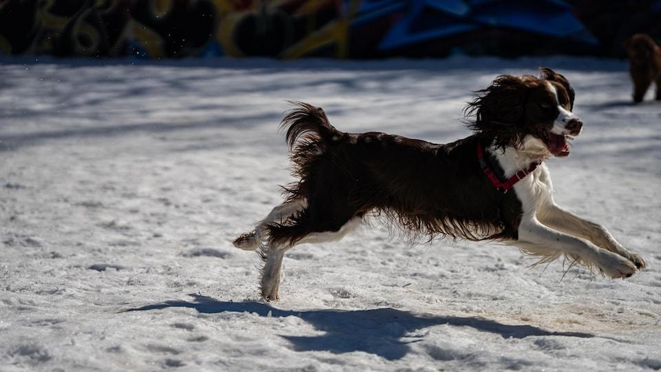 Un chien court sans laisse dans un parc.