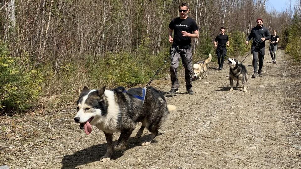 Des personne pratiquent la cani-rando.
