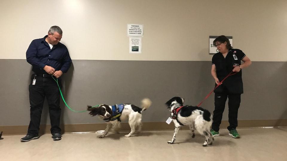 Les deux chiens sont tenus en laisse par leurs dresseurs.