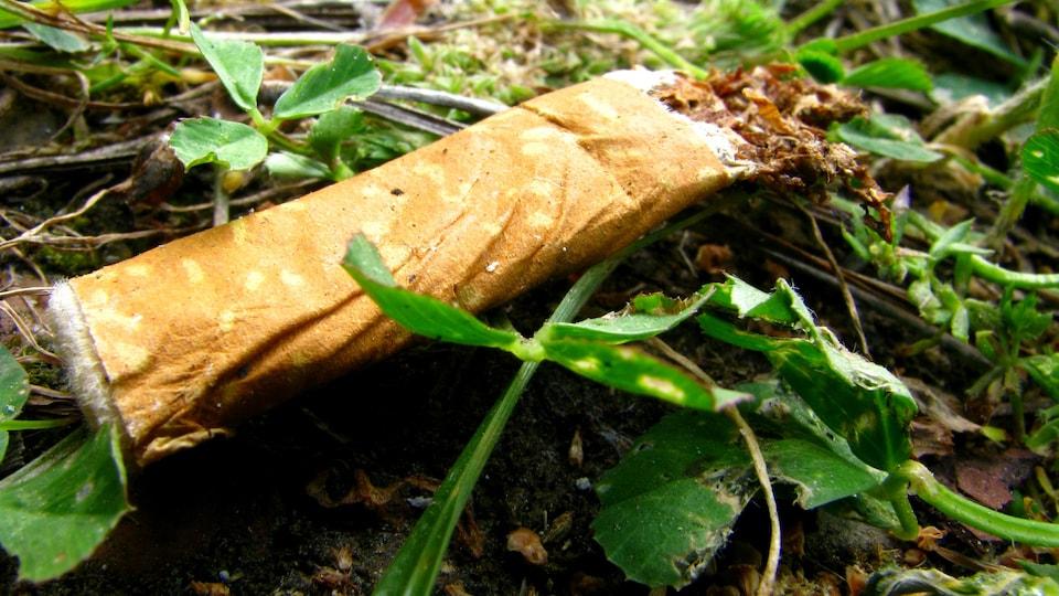 Un mégot de cigarette dans de l'herbe.