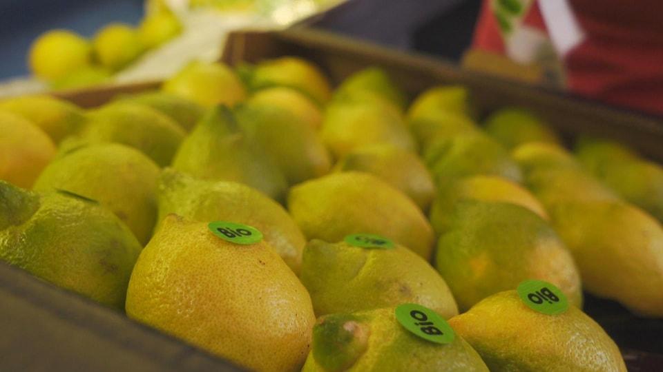 Des citrons jaunes portant l'inscription bio
