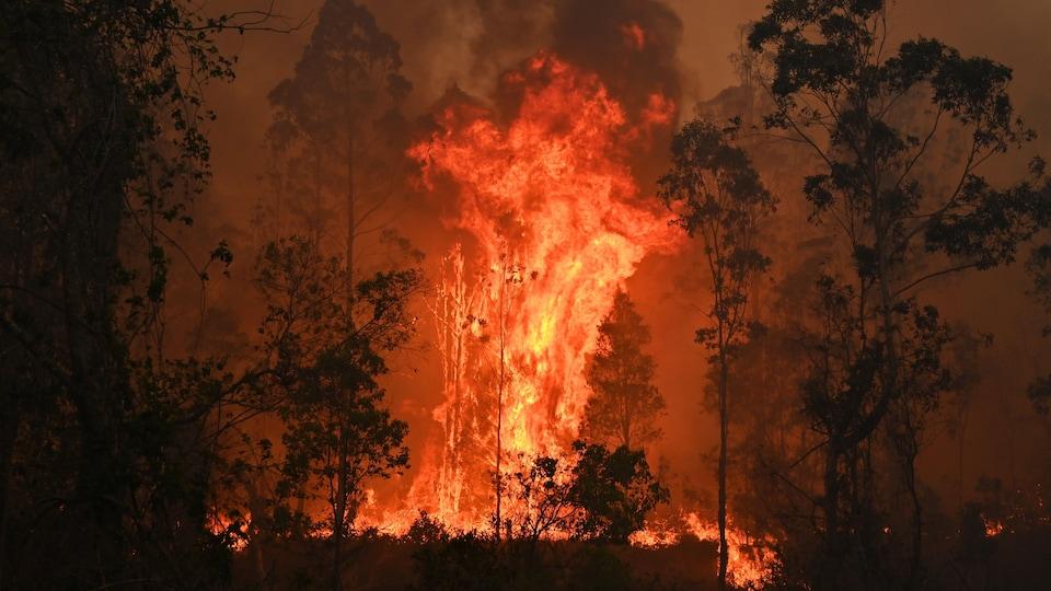 D'immenses flammes jaillissent de la forêt.