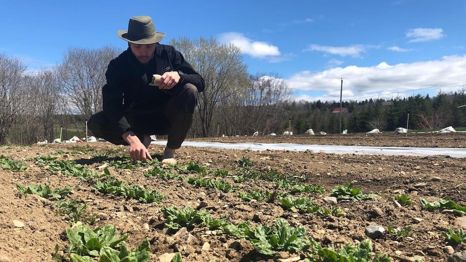 Olivier Côté-Thibault observe des pousses au sol.