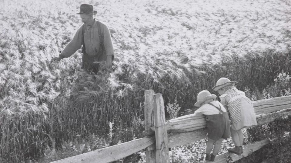 Un champ de blé sous le vent, dans la campagne du 20e siècle
