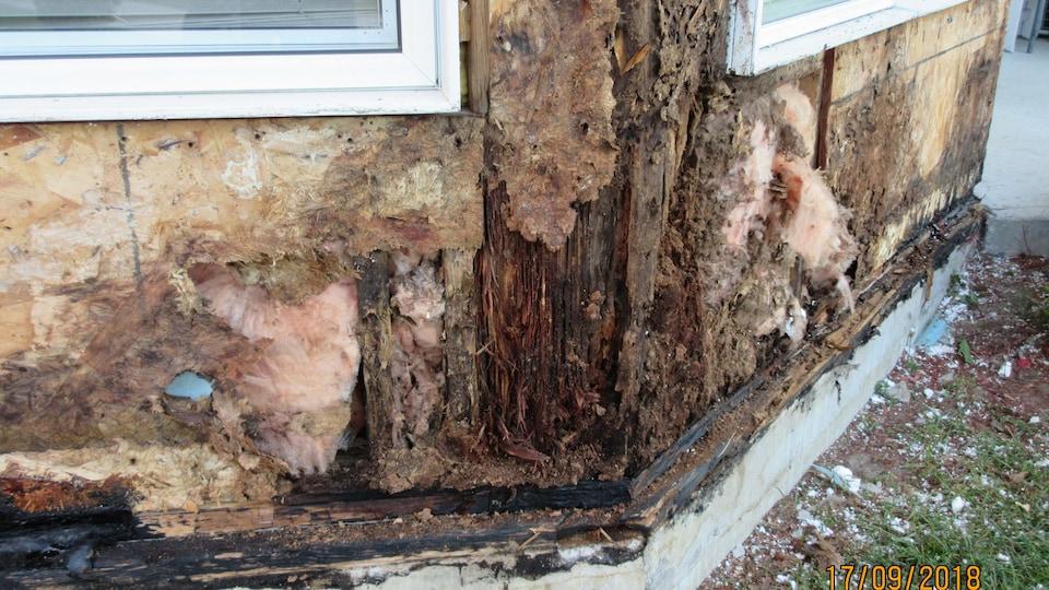 Des moisissures sur une structure de bois d'un immeuble résidentiel.