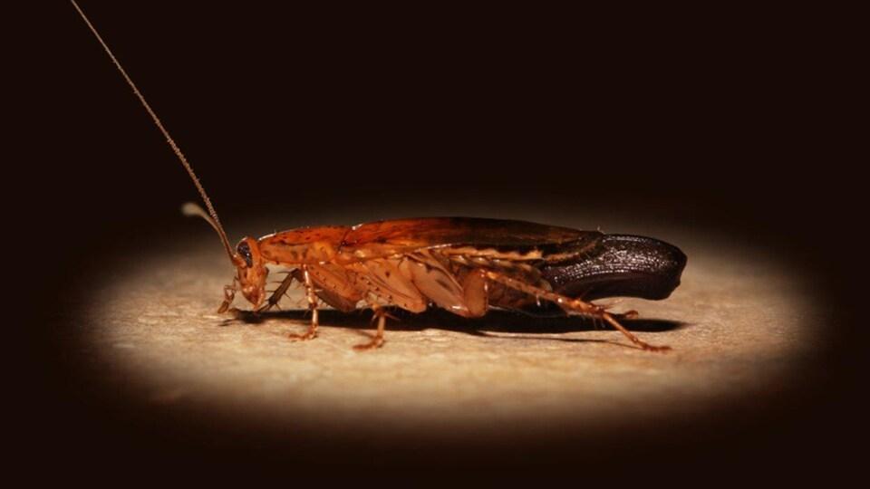 L'insecte est au centre d'un rayon de lumière qui met en évidence ses couleurs orangée et brune.