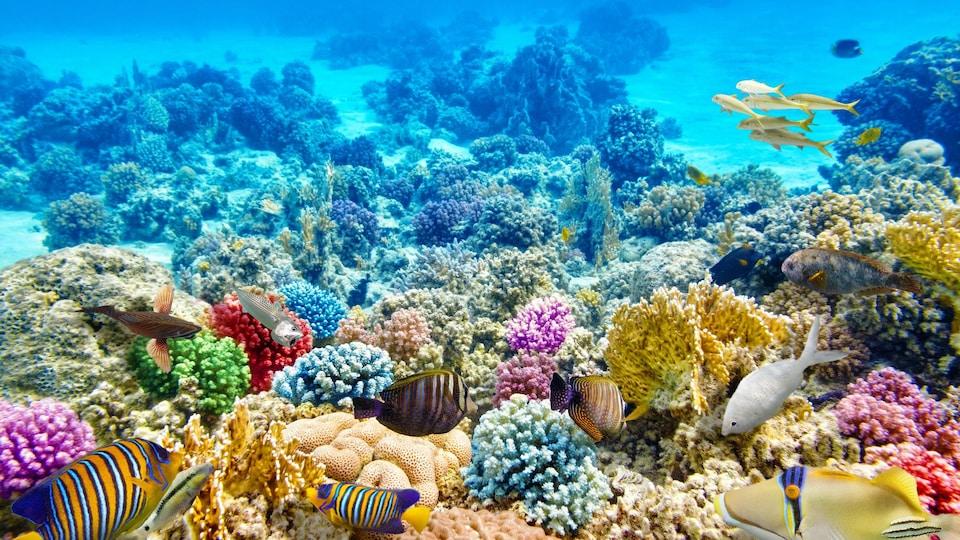 Sous l'eau, de magnifiques coraux et poissons tropicaux multicolores.